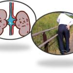 腎の下垂と腰痛について・・・船橋市のオステオパシー整体